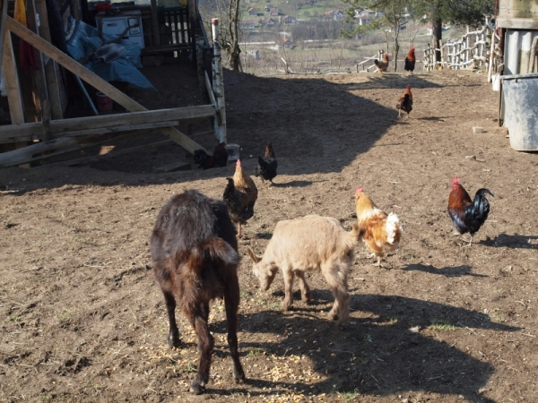 Posjeta prvoj Farmi magaraca u BiH